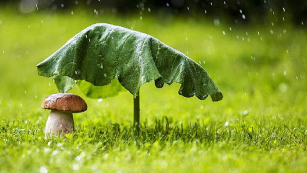 Погода 12 августа 2020 Украина: какую погоду обещает синоптик
