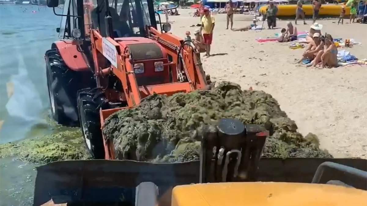 З одеських пляжів вивезли 200 тонн токсичних водоростей: вражаюче відео
