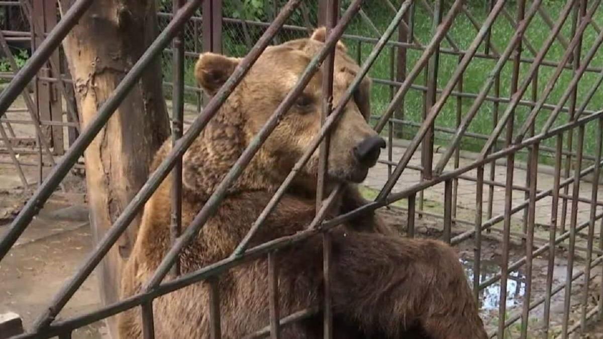 В Сочи медведи загрызли ребенка: животных застрелили