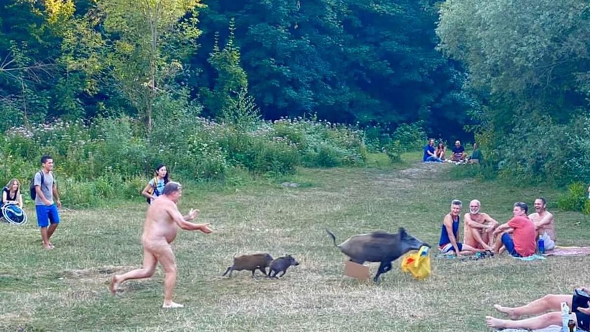 Мужчина голышом гонялся за кабанами
