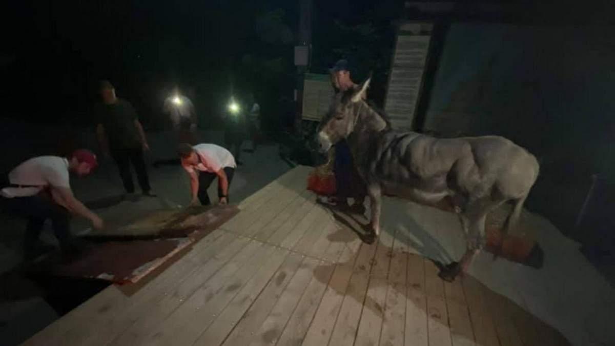 В Одессе активисты спасли осла