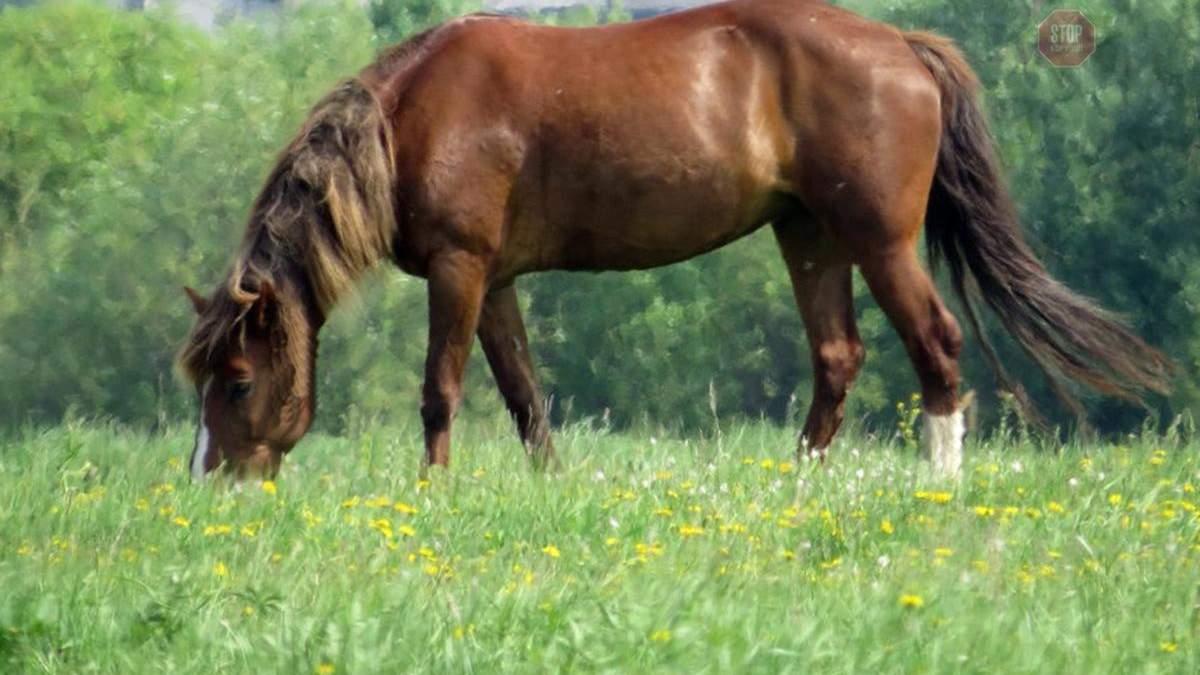 Конь искал подкопы арестантов в Запорожской исправительной колонии: теперь никто не сбежит