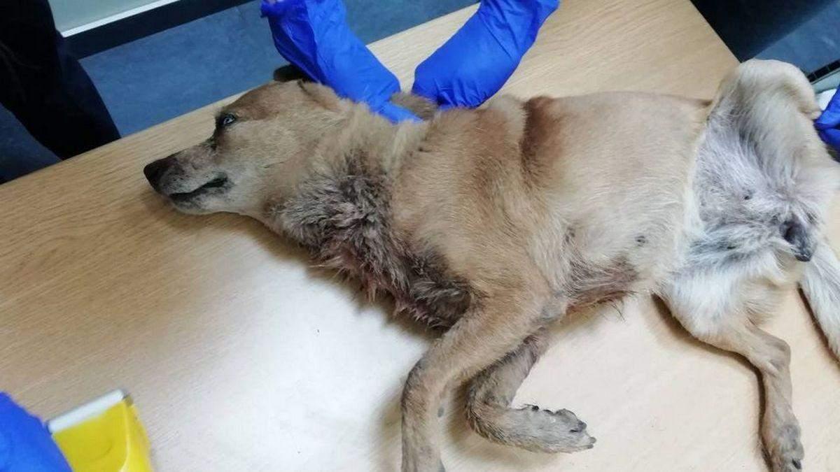 В Днепре люди несколько дней наблюдали, как умирает собака: фото 18+