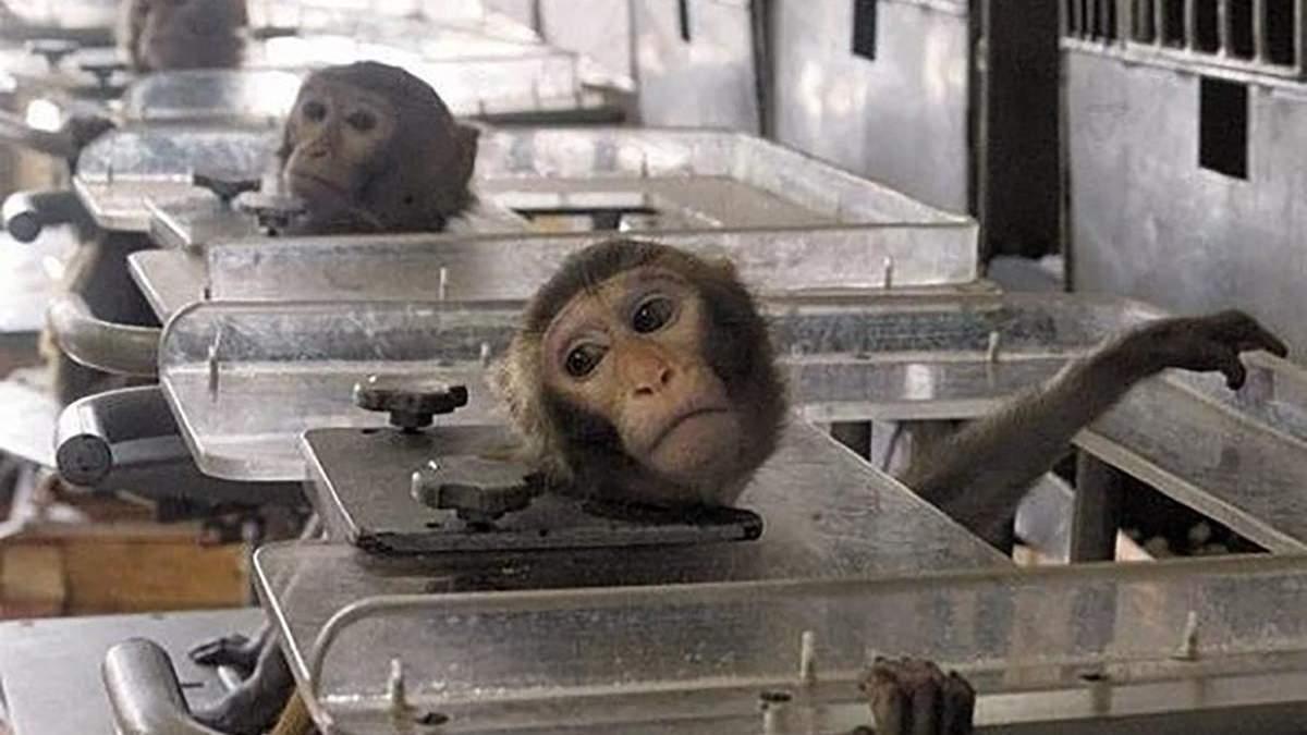 Закон № 0897 про дозвіл на експерименти над тваринами: текст
