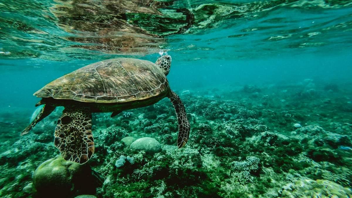 Обитатели Мирового океана
