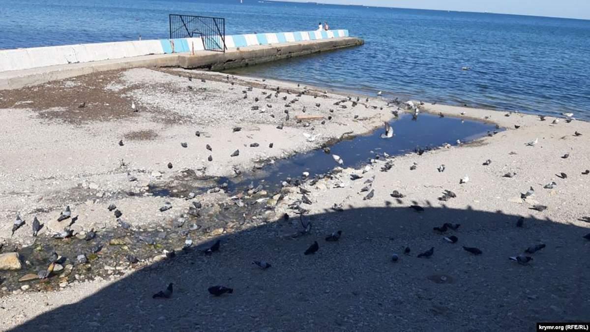"""Пляж у Феодосії поряд із """"каналізаційним струмком"""""""
