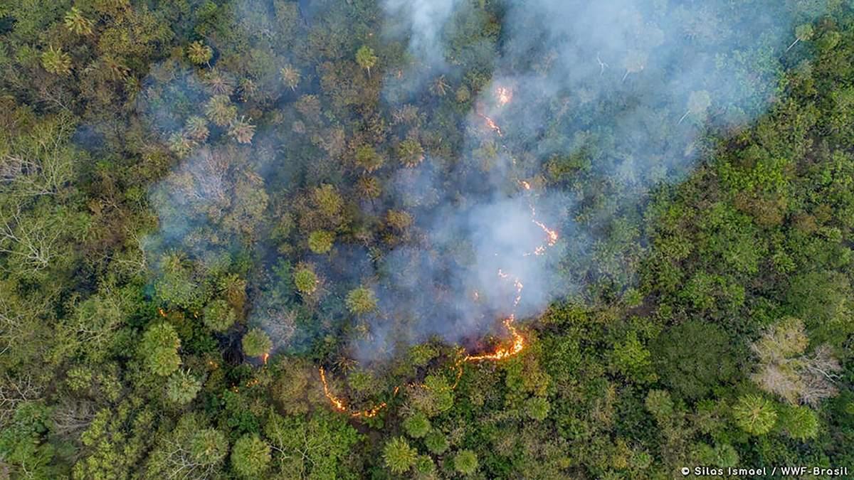 Пожары в Бразилии 2020: причины огня, вымирают животные