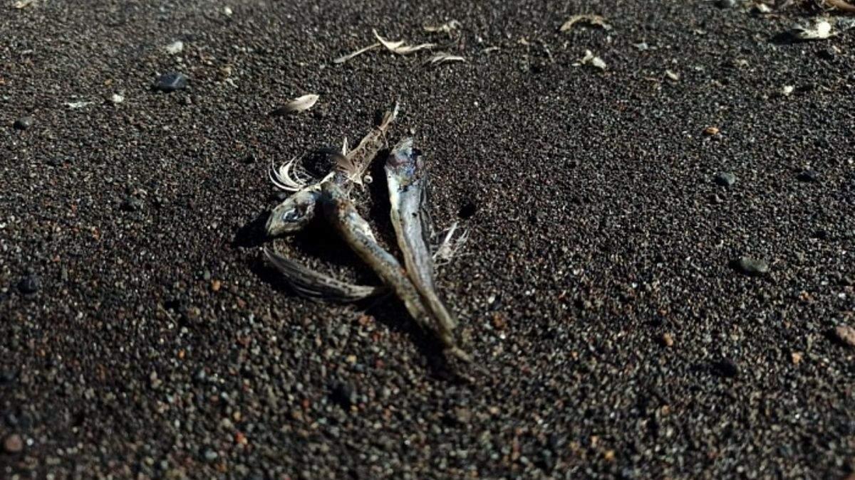 На пляжі Камчатки викинуло тисячі мертвих тварин: відео - 24 Канал
