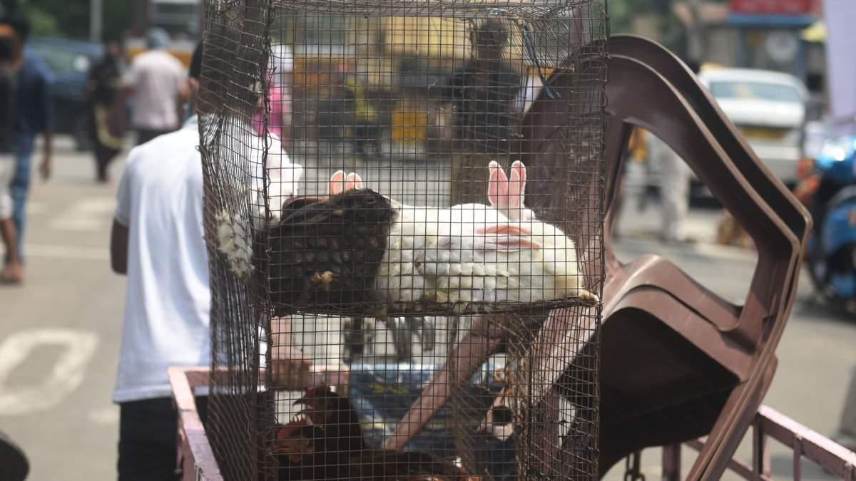 Європарламент хоче заборонити фермерам тримати тварин у клітках
