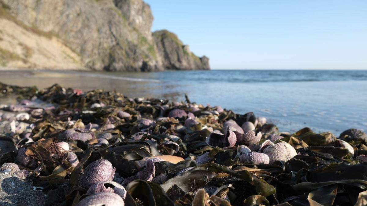 Россия отказывается признавать экокатастрофу на Камчатке