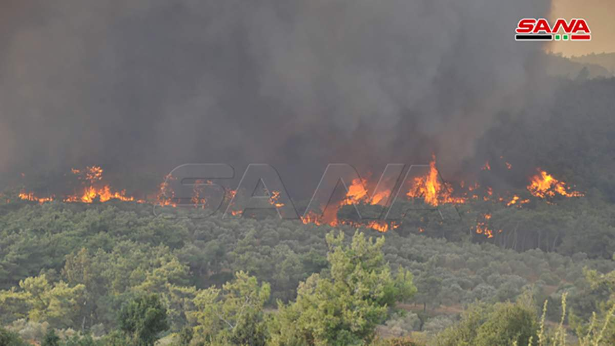На заході Сирії виникли масштабні лісові пожежі: деталі