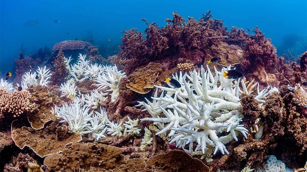 Великий Бар'єрний риф втратив корали через зміни клімату: деталі