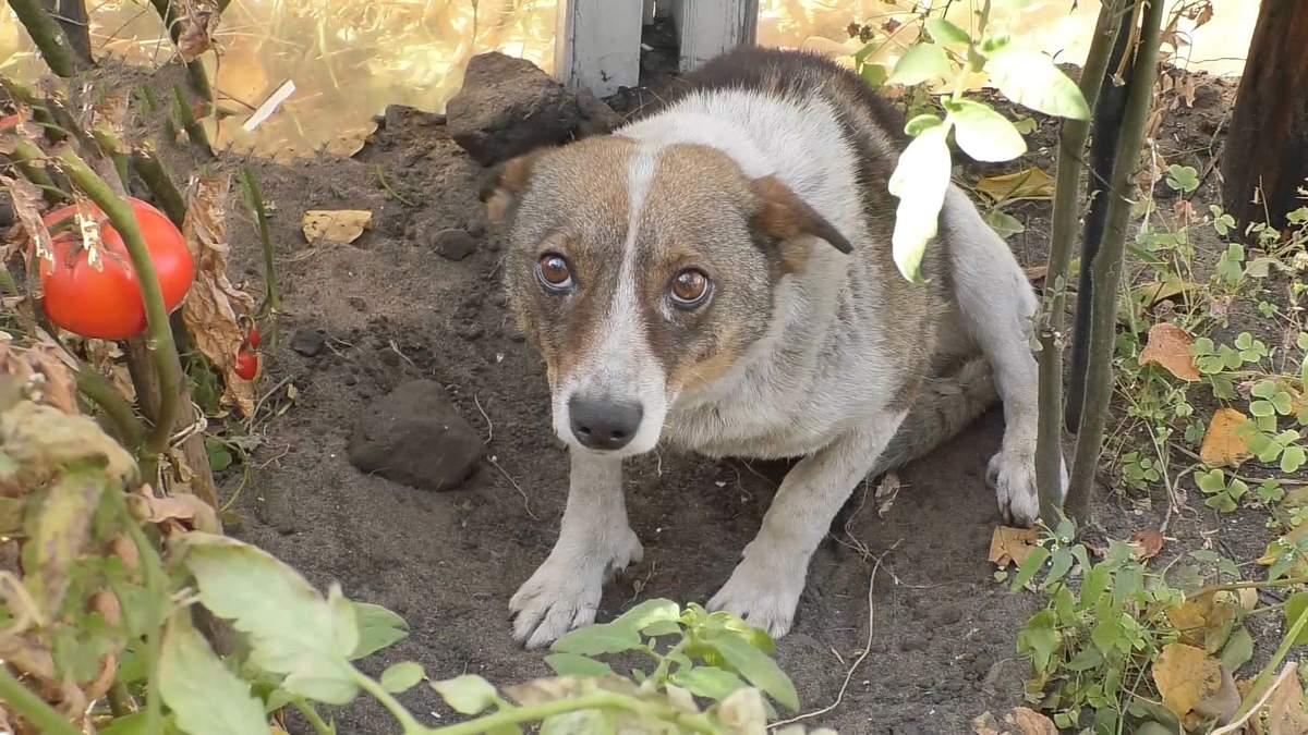 Пожары в Луганской области: волонтеры спасают животных