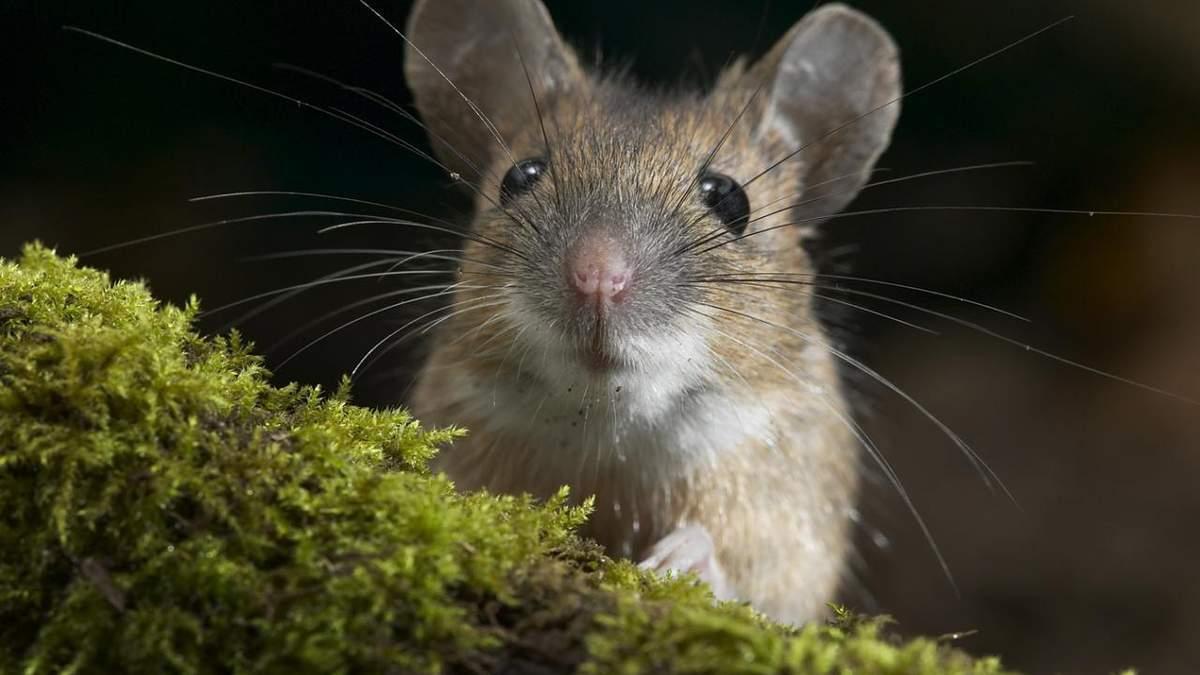 Одессит нашел живых мышат в пачке овсянки - видео