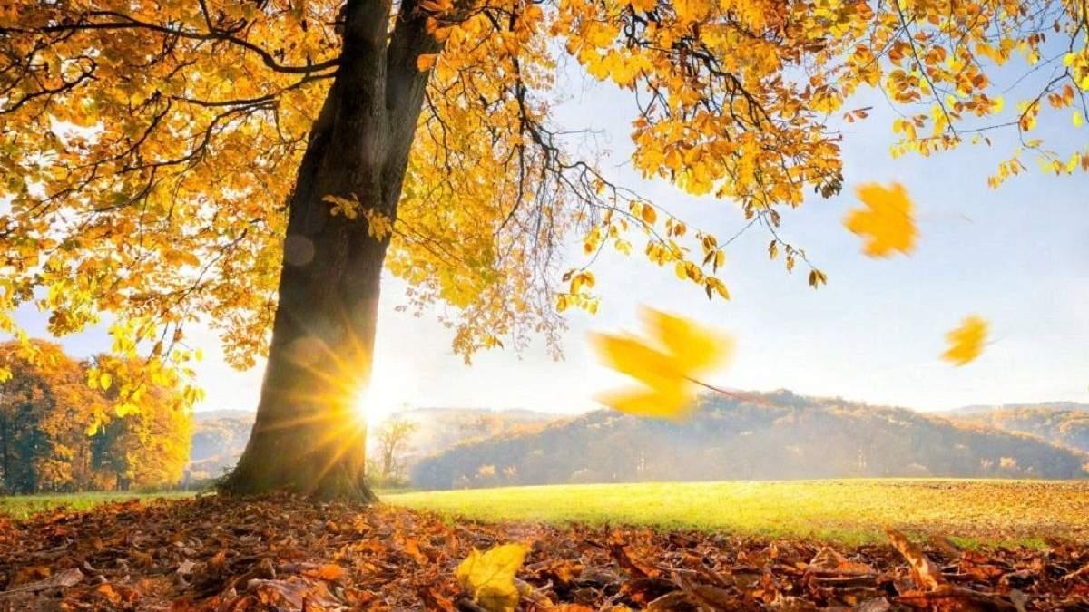Погода 28 октября 2020: прогноз от синоптиков Украины