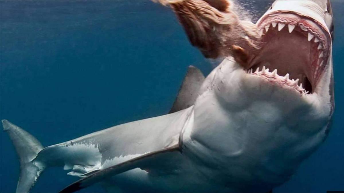 В Єгипті створили робочу групу через напад акули на українських туристів