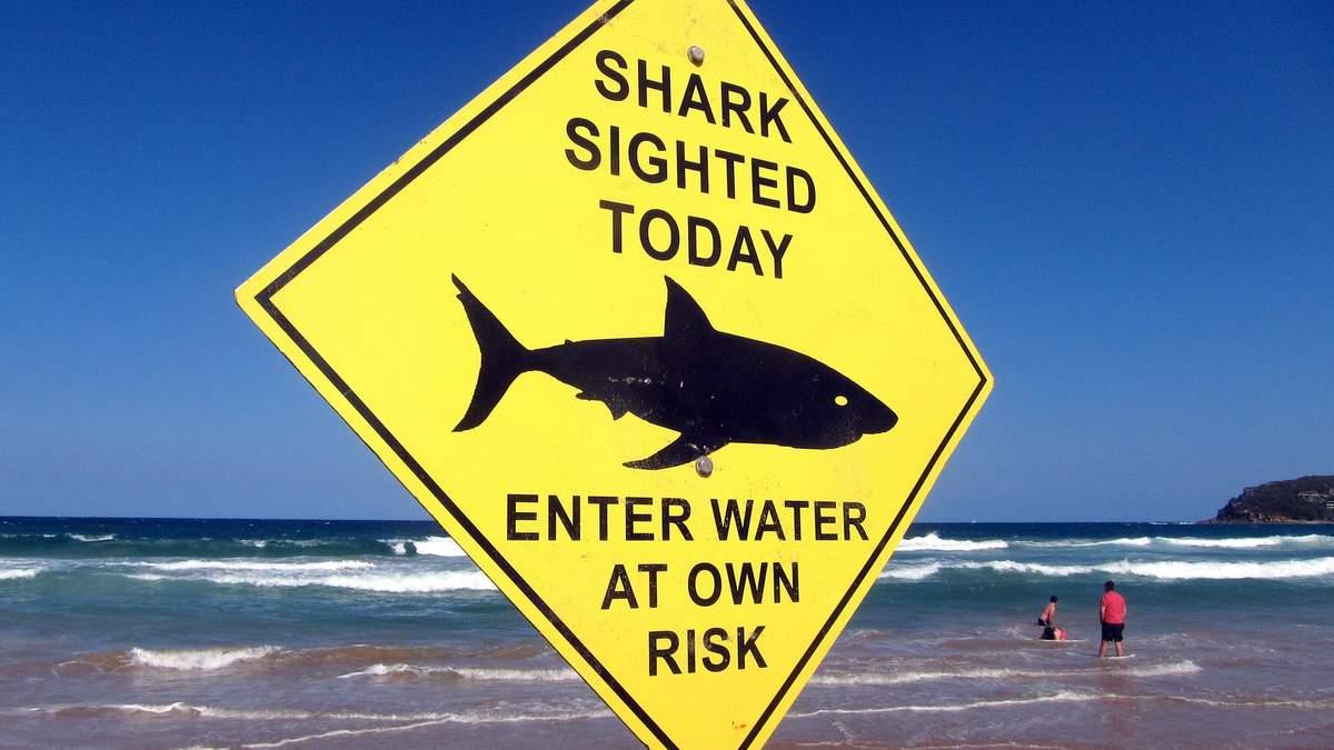В Египте акула напала на местного гида: новые детали инцидента