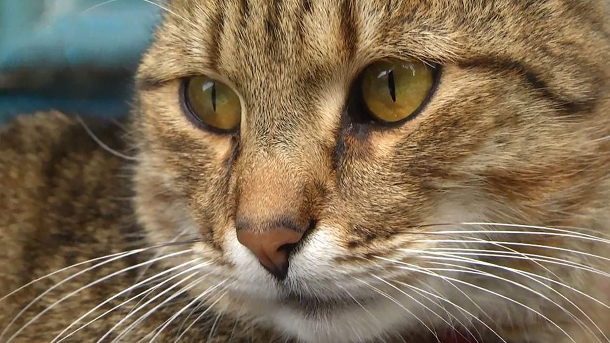 Коти у Львові: у яких незвичних місцях оселилися та яку користь несуть
