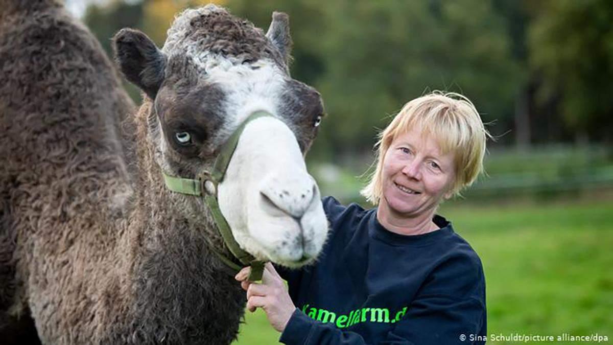 В Германии начали производить верблюжье молоко: секреты производства