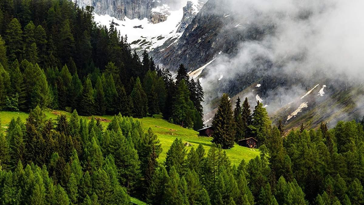 Карпати: відновити дерева – не значить відновити ліс