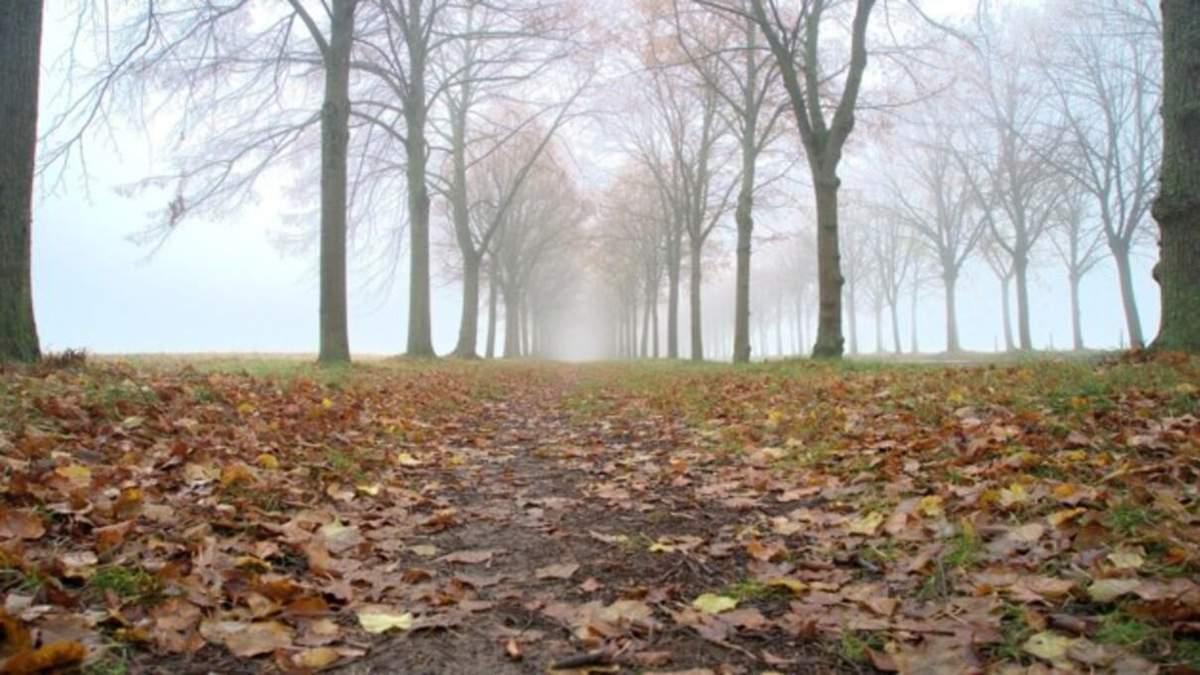 Погода 15 листопада 2020: прогноз від синоптиків України