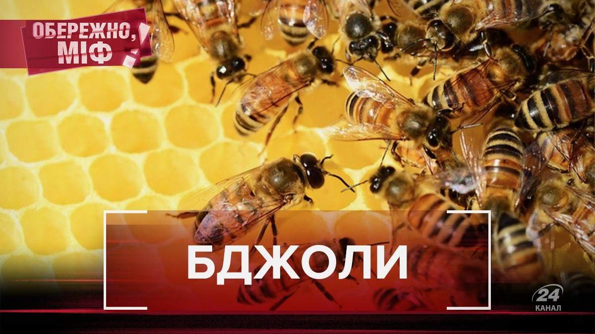 Відомі факти та міфи про бджіл, у які ви вірили