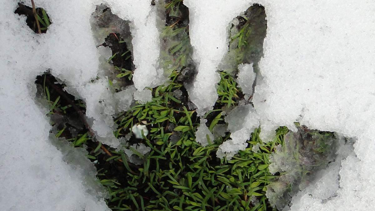 В Киеве коммунальщики стригут газоны когда идет снег
