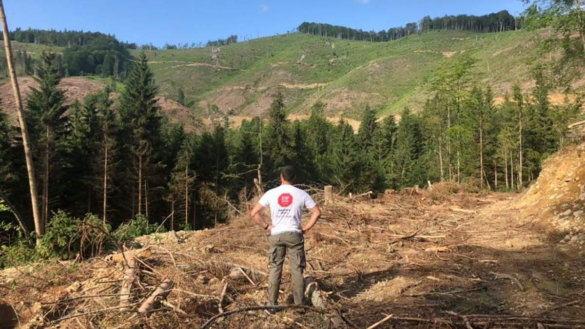 ООН: Из-за незаконной вырубки и изменения климата Карпатский регион – в реальной опасности