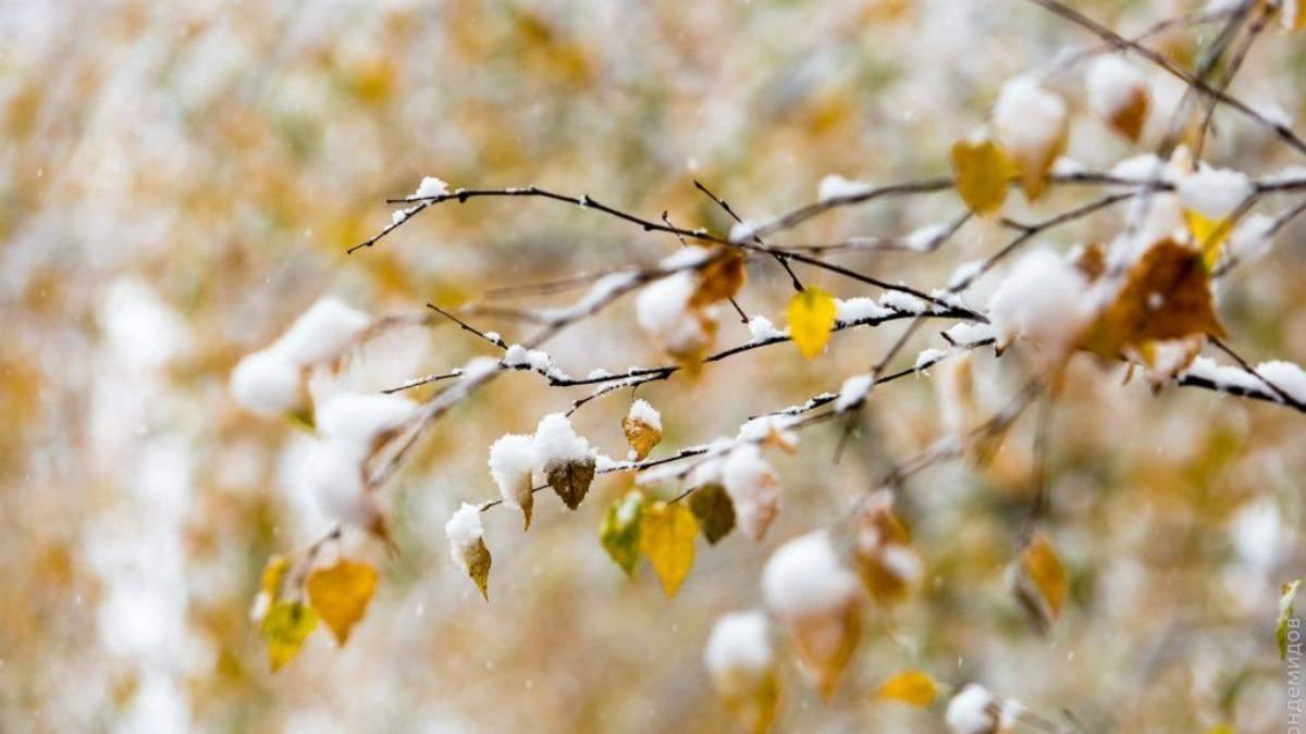 Погода 29 ноября 2020: прогноз от синоптиков Украины