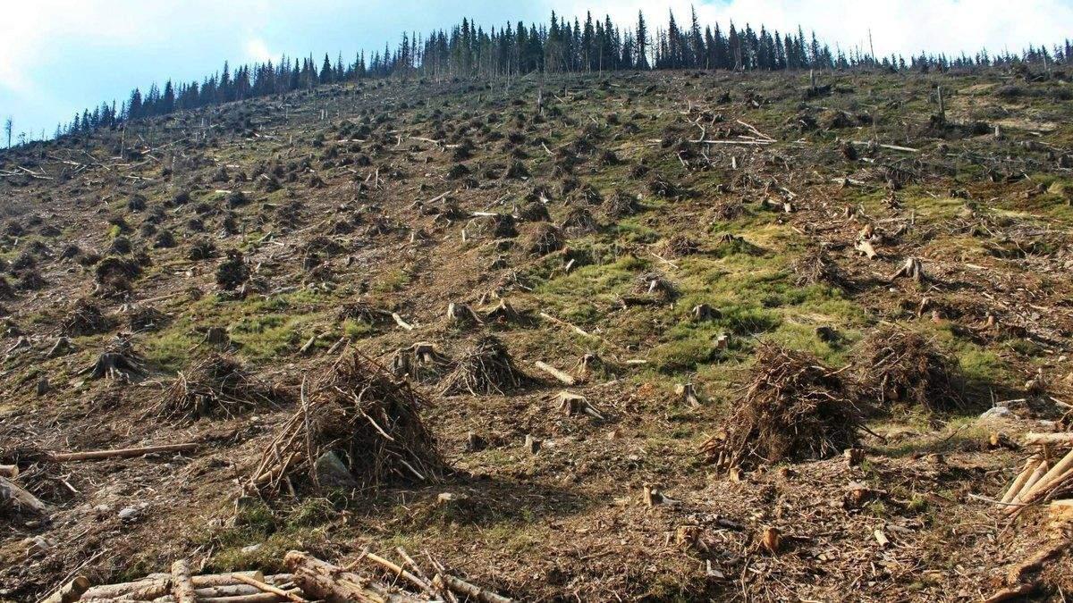 Украинские политики спекулируют на проблеме защиты окружающей среды, – эксперт