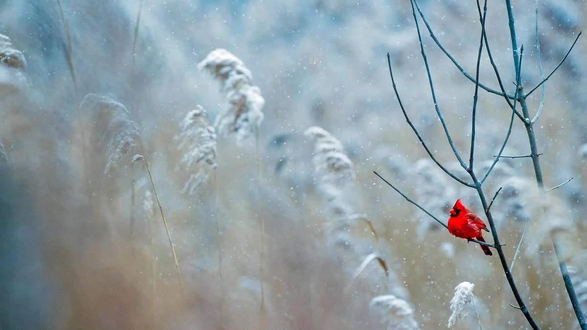Погода 2 декабря 2020: прогноз от синоптиков Украины