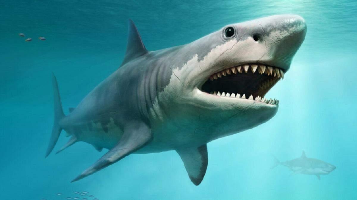 В Египте акула напала на женщину: фото и видео