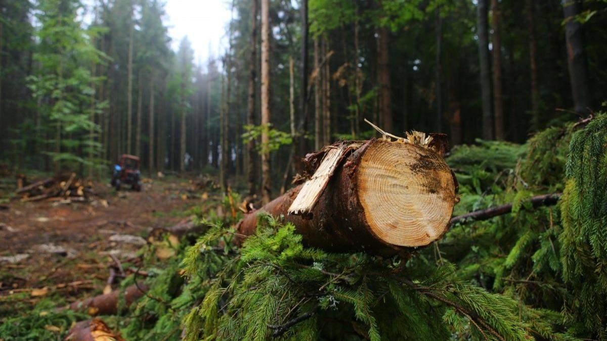 Правительство значительно ограничил вырубку лесов на склонах Карпат