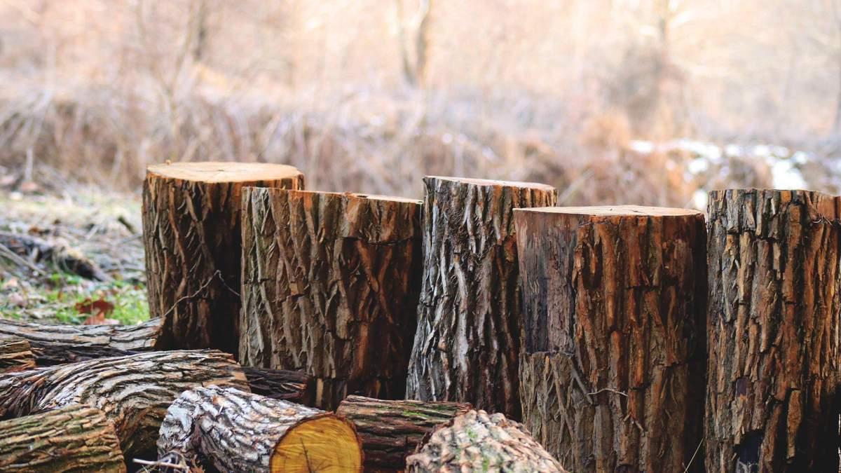 ЕС победил в арбитраже с Украиной дело в отношении леса-кругляка