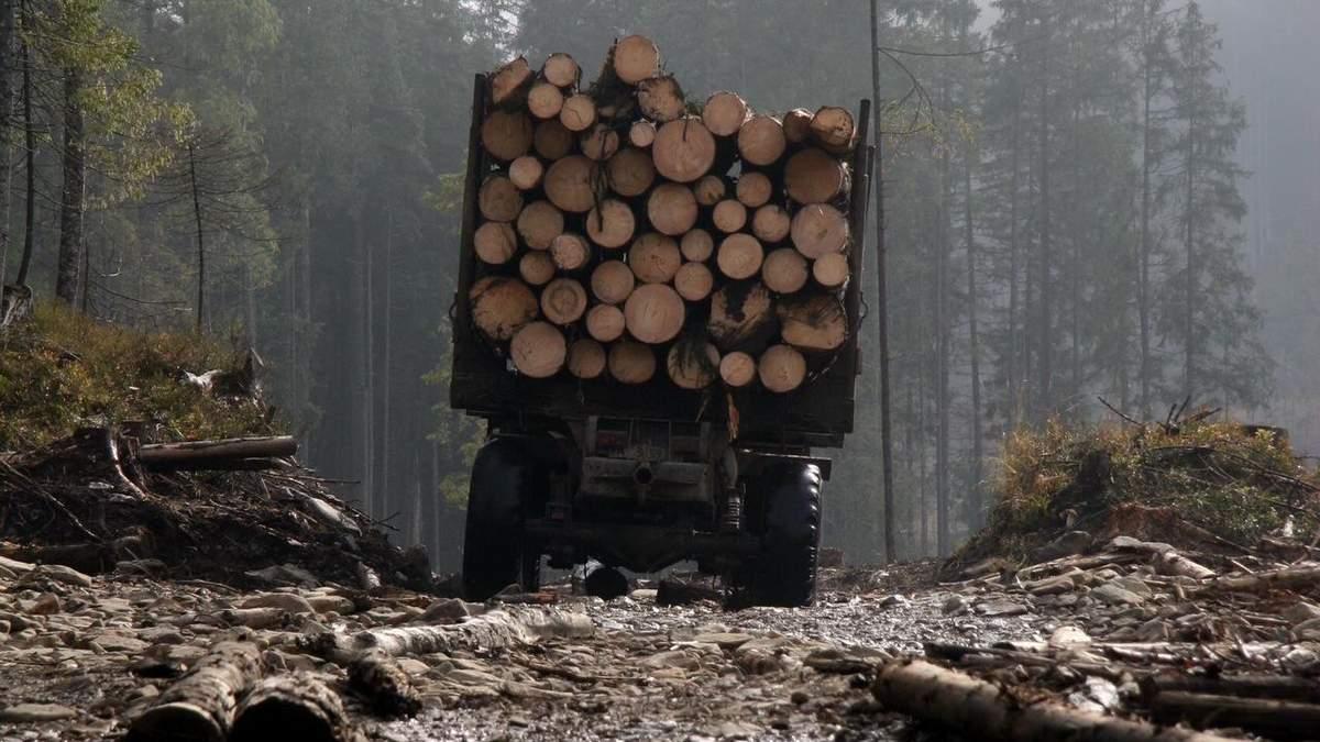 Вырубка лесов на Житомирщине: убытки достигают 6,3 миллиона гривен