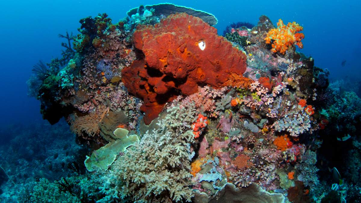 Коралові рифи можуть назавжди зникнути: як їх врятувати