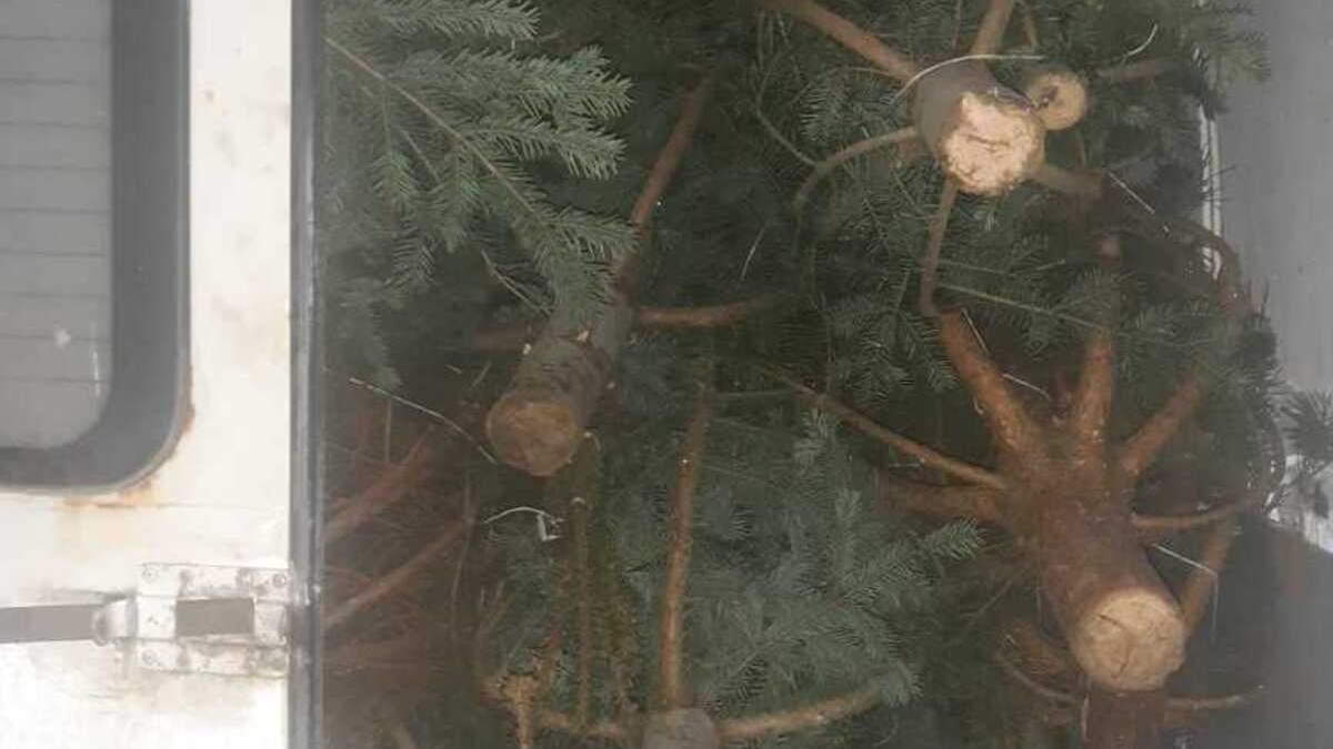 Хотел продать нечипированные елки: у мужчины изъяли микроавтобус и товар - фото