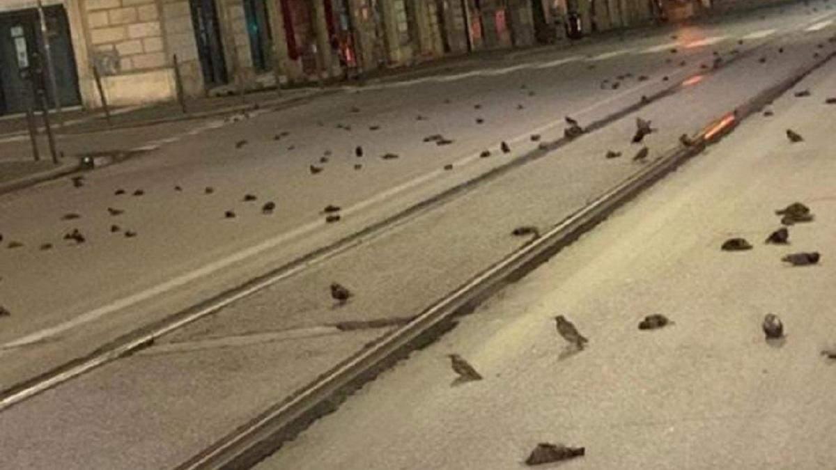 В Италии сотни птиц погибли в результате фейерверков - видео