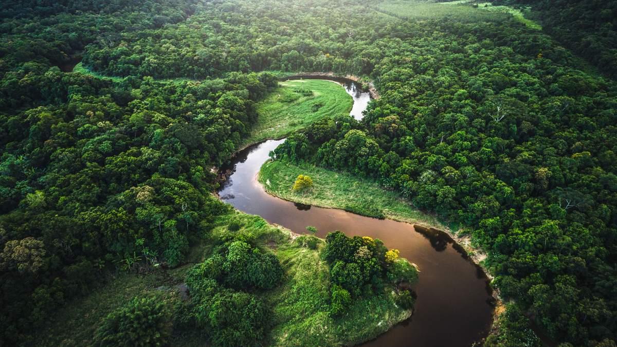 Профессор Вокер прогнозує перетворення амазонських лісів на посушливу місцевість до 2064 року