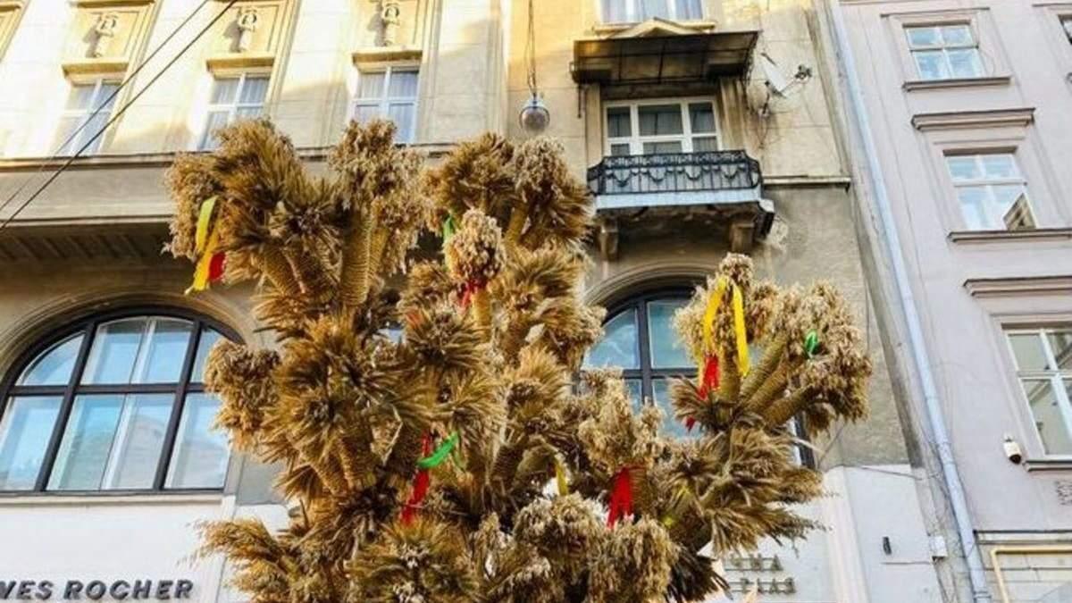 У Львові напередодні Різдва 2021 встановили 4-метрового Дідуха: фото