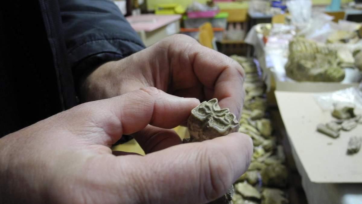 На Буковині виявили зуб мамонта, якому 300 тисяч років: фото