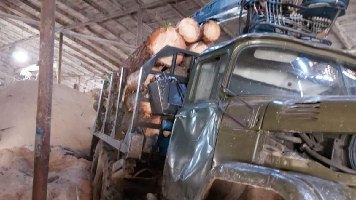 Вырубили деревья на более 2,6 миллиона гривен: следователи сообщили о подозрении черным лесорубам