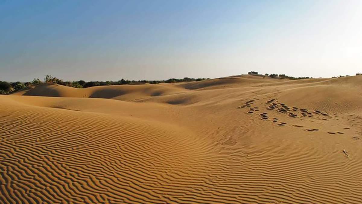 Степи на Півдні України можуть перетворитися на пустелю: причина