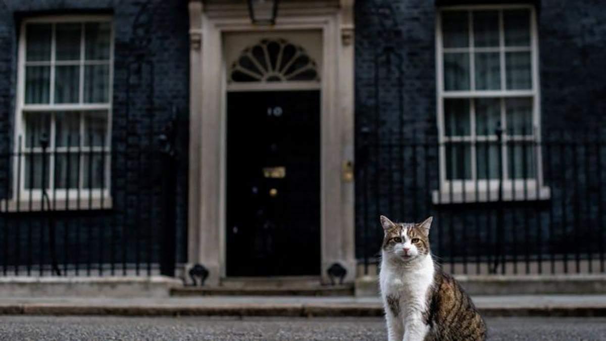 Главный кот Великобритании празднует 10 лет на службе Королевства