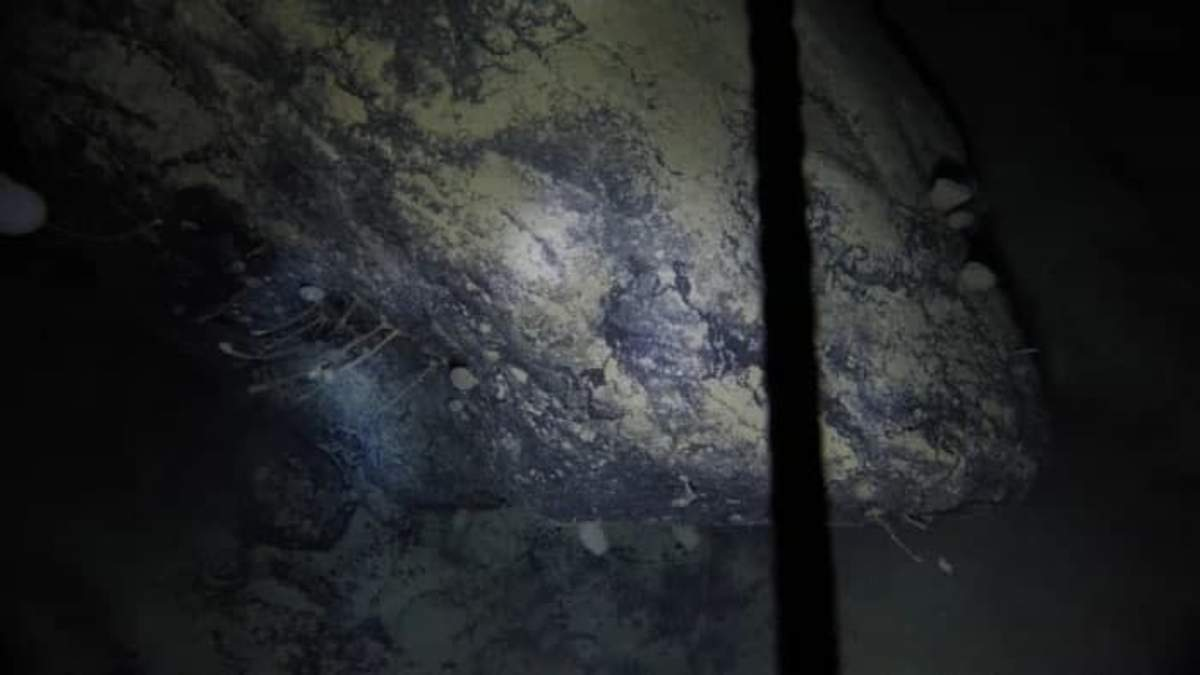 В Антарктиді знайшли загадкових істот, невідомих науці: фото