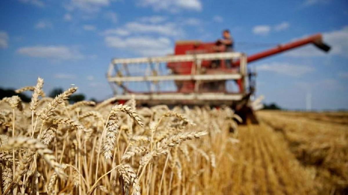 Украина ежегодно теряет 2 млрд долларов из-за схем международных зернотрейдеров