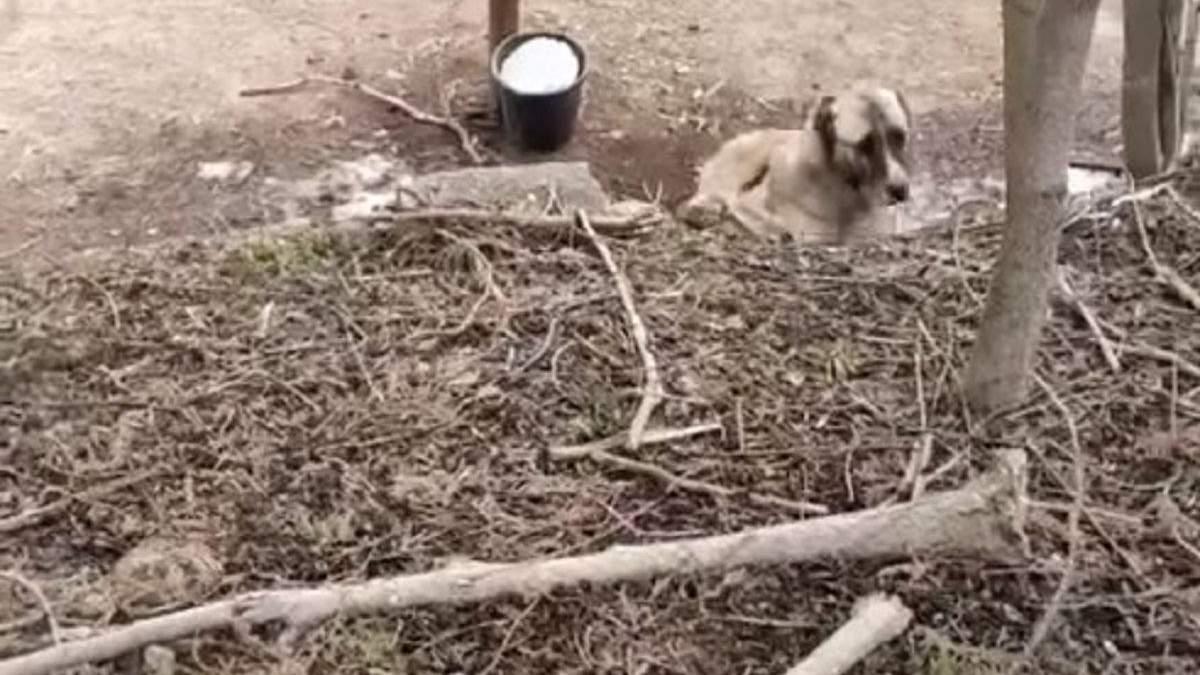 На Одещині знайшли ферму, де знущаються над тваринами