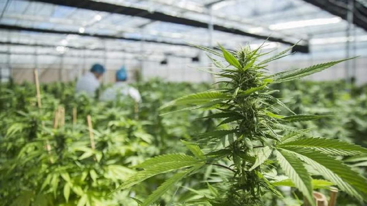 16 штат США легализовал марихуану: какой именно