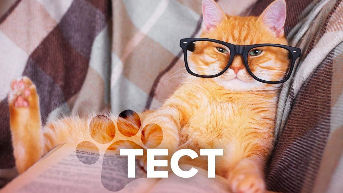 Насколько ты - литературный котик: праздничный тест