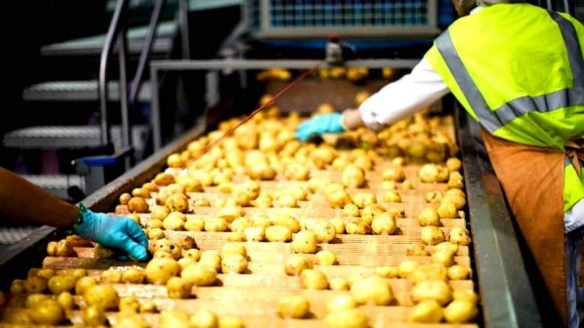 На Львівщині побудують завод з переробки картоплі за 7 мільйонів доларів
